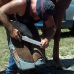 Marshall Shoeing- The Farrier - thefarrier.co.nz - farrier supplies wairarapa